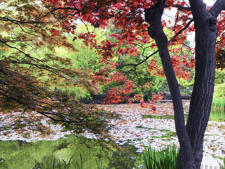 春の紅葉と水面の桜(道庁の5月)
