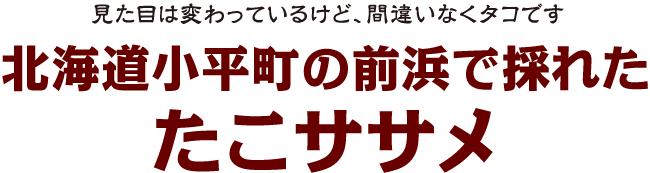 見た目は変わっているけど、間違いなくタコです北海道小平町の前浜で採れた たこササメ